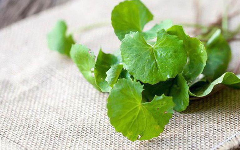 Điều trị viêm da cơ địa bằng rau má
