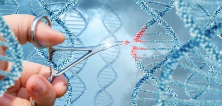 Bệnh tổ đỉa không lây qua tiếp xúc trực tiếp nhưng có tính di truyền.