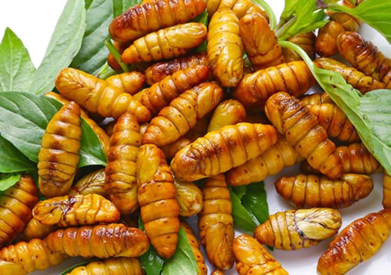Nhộng tằm dù có giá trị dinh dưỡng cao nhưng lại là thực phẩm dễ gây dị ứng. Do đó, để ngăn bệnh tổ đỉa tái phát thì nên kiêng ăn thực phẩm này.
