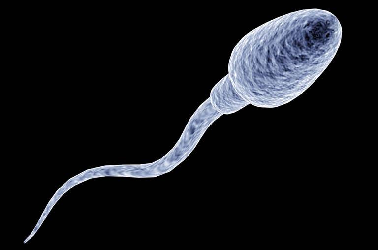 Trường hợp nam giới bị rối loạn cương dương mắc thêm chứng tinh trùng yếu thì khả năng sinh sản của bạn sẽ bị ảnh hưởng