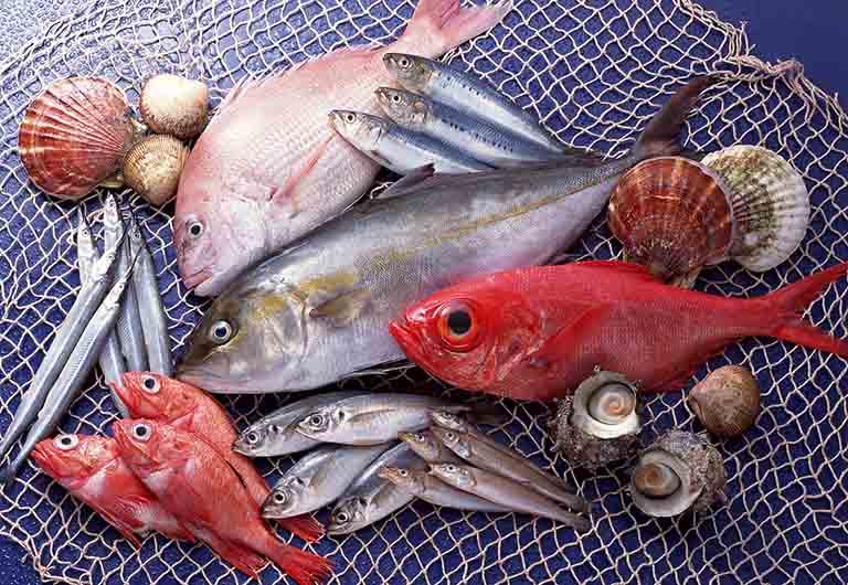 Các loại cá biển