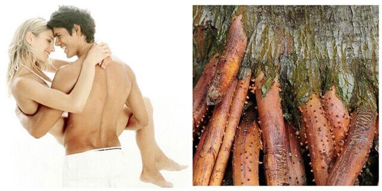 Rễ cau chữa xuất tinh sớm