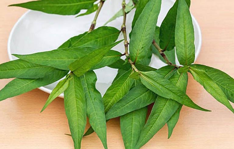 Cách chữa lang ben bằng rau răm