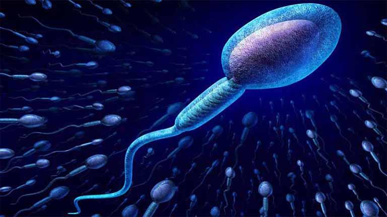 Thận yếu có ảnh hưởng đến tinh trùng không?