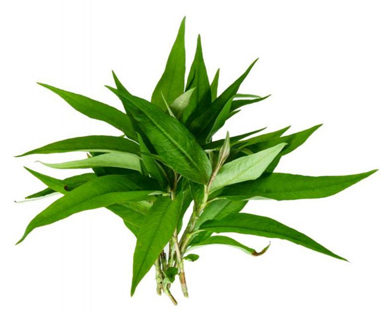 Điều trị bệnh bằng rau răm