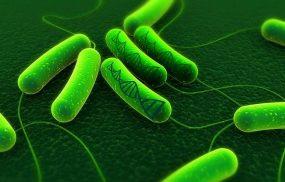 Có thể điều trị vi khuẩn HP khỏi hoàn toàn