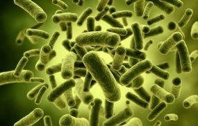 Vi khuẩn HP mang gen CagA gây ra các bệnh lý về dạ dày