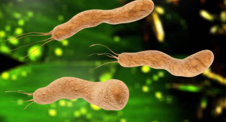 Vi khuẩn này rất dễ lây nhiễm