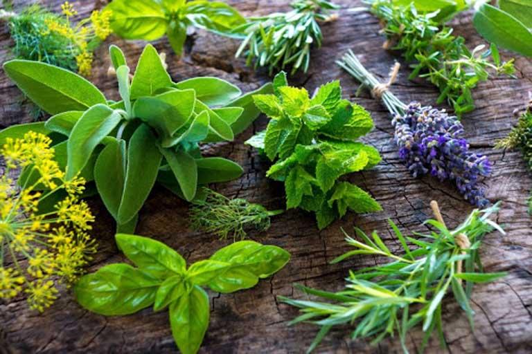 Sử dụng các loại thảo dược có sẵn trong vườn nhà để điều trị bệnh viêm xoang có mủ