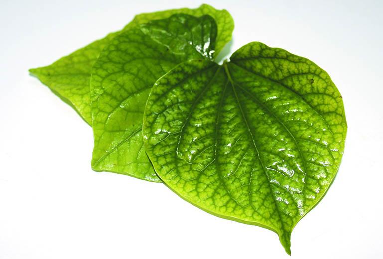 Lá lốt có công dụng kháng viêm mạnh, thích hợp dùng để điều trị bệnh viêm xoang tại nhà