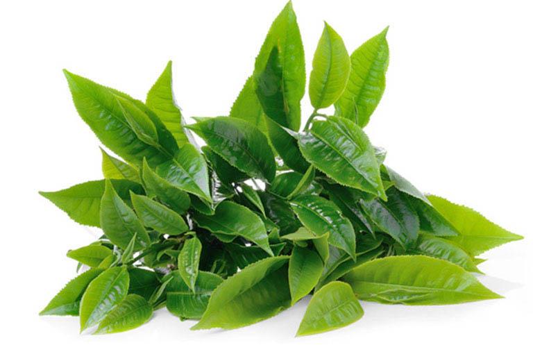Tận dụng lá trà xanh để cải thiện các triệu chứng của bệnh viêm xoang