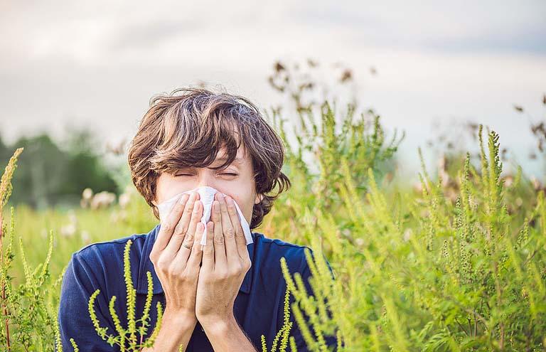 Những người có cơ địa mẫn cảm, khi tiếp xúc với phấn hoa sẽ khởi phát bệnh viêm mũi dị ứng