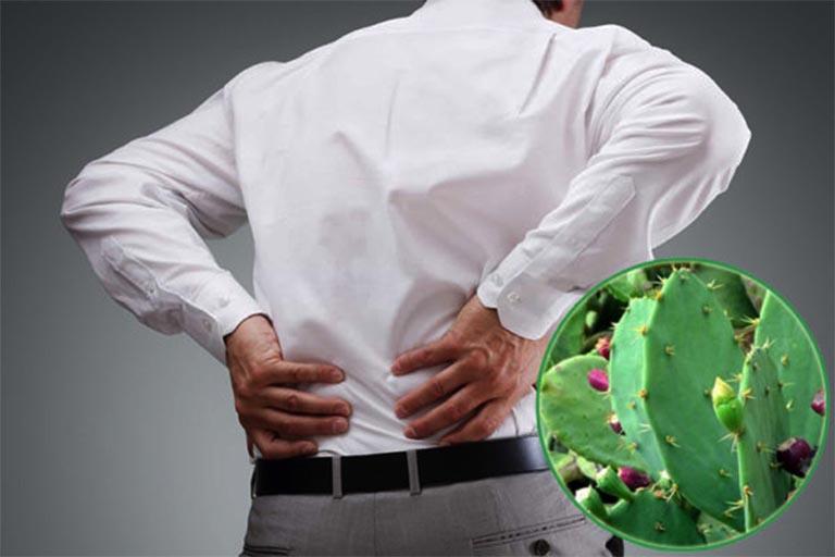 bài thuốc dân gian chữa thoát vị đĩa đệm từ cây xương rồng