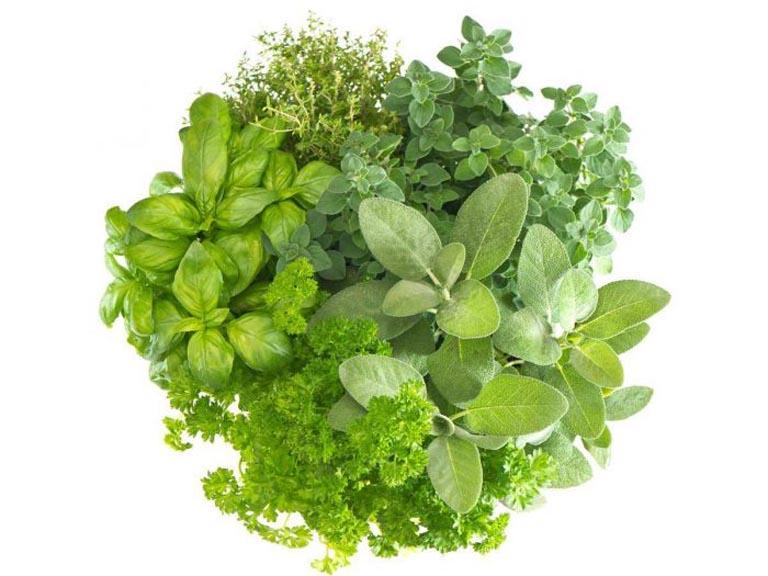 Sử dụng các loại thảo dược có sẵn trong tự nhiên để trị bệnh đau khớp gối không sưng tại nhà