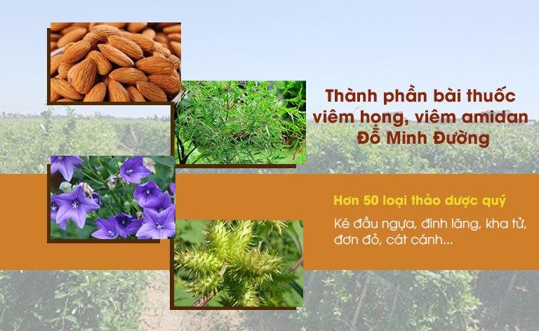 Những thảo dược quý có mặt trong bài thuốc viêm họng, viêm amidan Đỗ Minh Đường