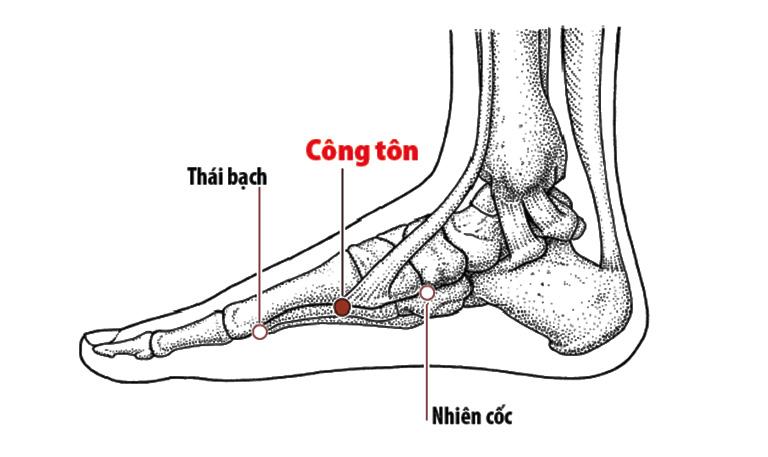 Huyệt Công tôn có tác dụng hỗ trợ điều trị bệnh đau dạ dày khi tác động lực của ngón tay thông qua thủ thuật bấm huyệt