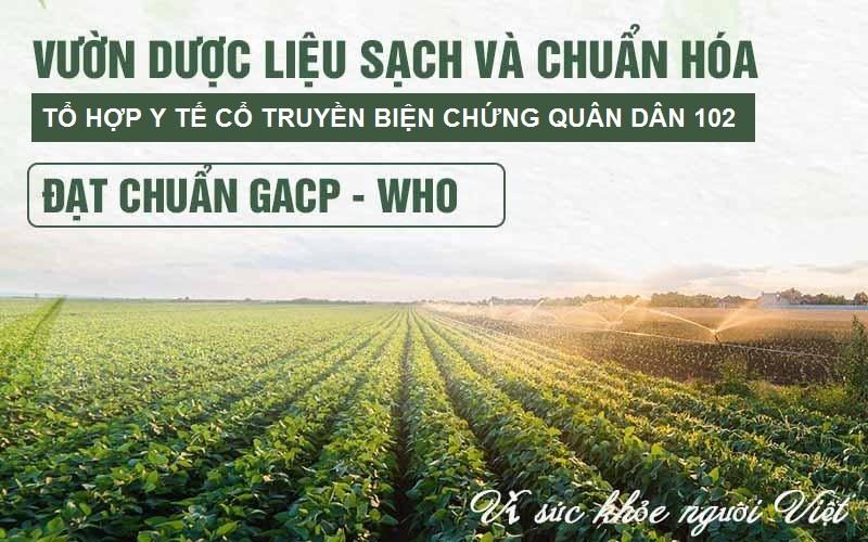Vườn dược liệu của Quân dân 102 cung cấp những vị thuốc sạch, đạt tiêu chuẩn GACP - WHO