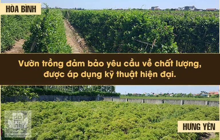 Vườn dược liệu sạch do đơn vị Đỗ Minh Đường chủ lực ươm trồng