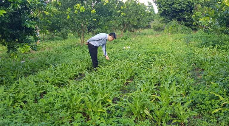 Đơn vị phát triển các vườn thảo dược sạch cung cấp trong điều trị
