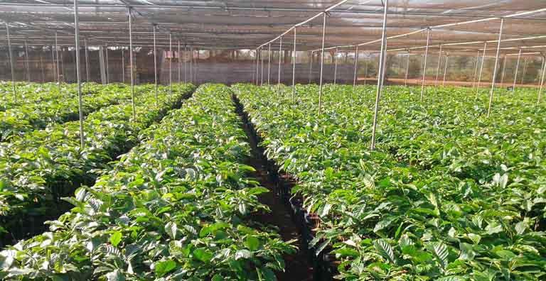 Vườn trồng thảo dược sạch của đơn vị