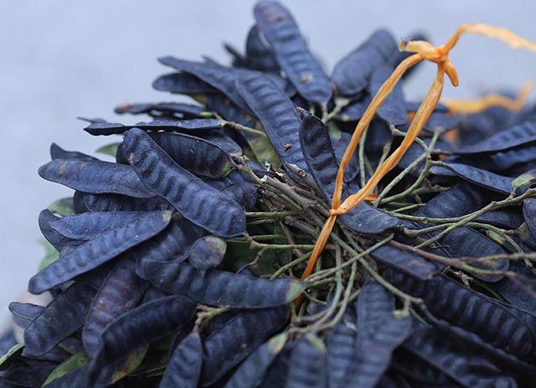 Bồ kết là một trong những nguyên liệu không chỉ được dân gian tận dụng làm đẹp mái tóc mà còn dùng trị viêm da tiết bã da đầu