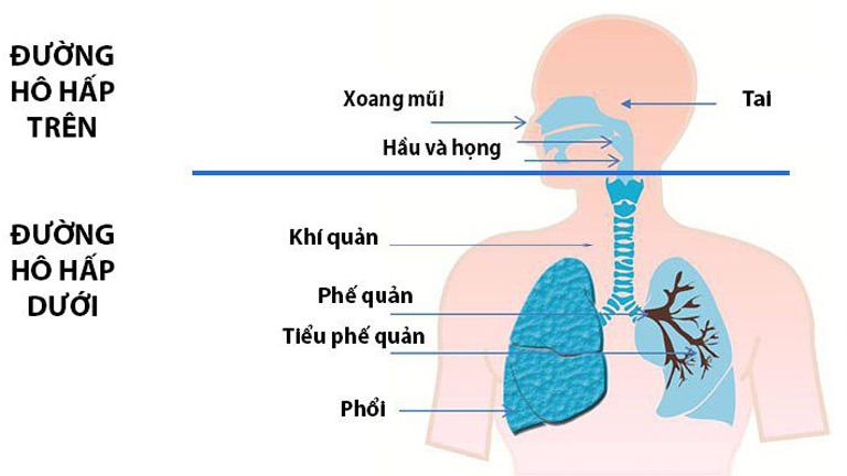 Đường hô hấp bị tổn thương là nguyên nhân gây ho đờm ra máu thường gặp