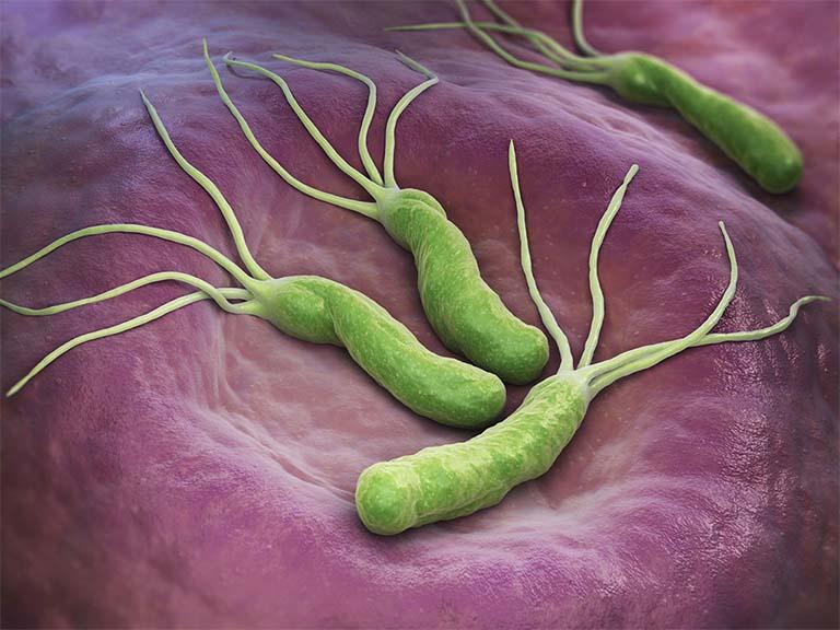Vi khuẩn HP (tên gọi đầy đủ là Helicobacter Pylori) là một trong những thủ phạm hàng đầu gây ra các bệnh lý liên quan đến dạ dày