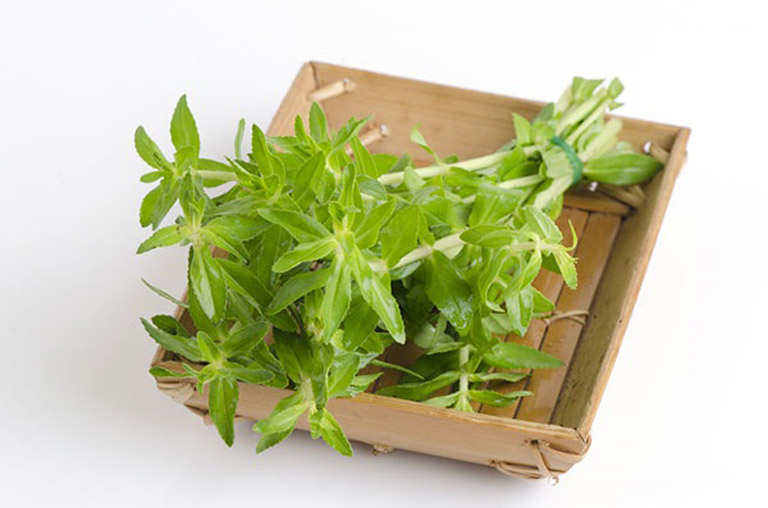 Dùng rau ngổ chữa sỏi mật tại nhà có độ an toàn cao và ít tốn kém chi phí