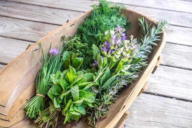 Sử dụng thảo dược có sẵn trong vườn nhà để cải thiện triệu chứng của bệnh phong thấp